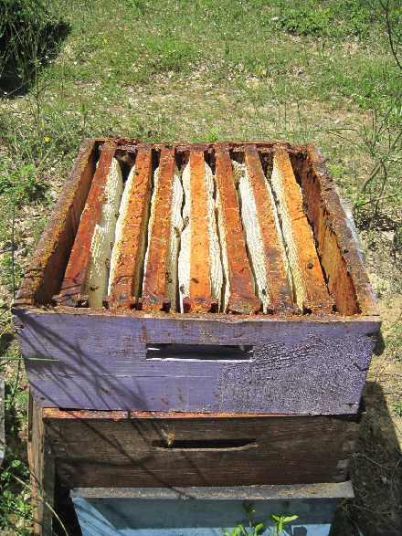 Le mus e du miel tout sur le miel l 39 apiculture les - La ruche a miel ...